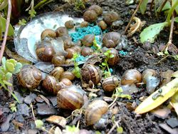Snails-and-slugs-2