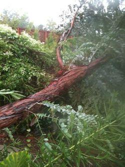 Myoldtree
