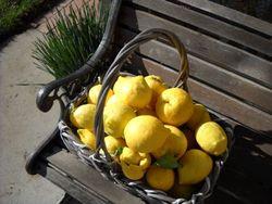 Lemonbasket